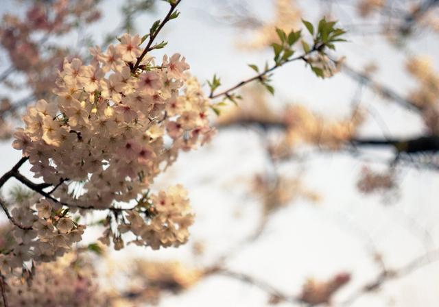 2011Apr_flower01.jpg