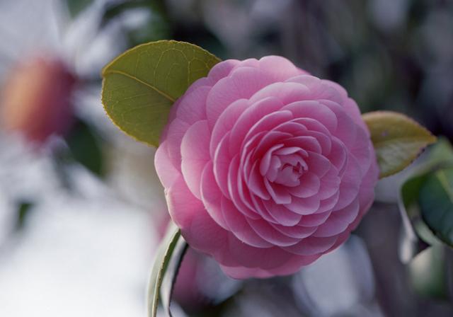 2011Apr_flower04.jpg