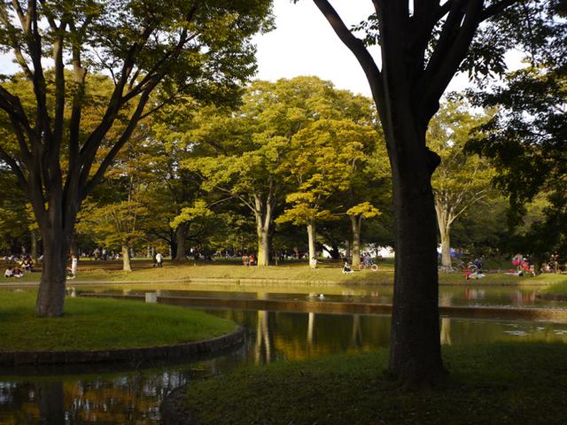 yoyogi-p_02.jpg