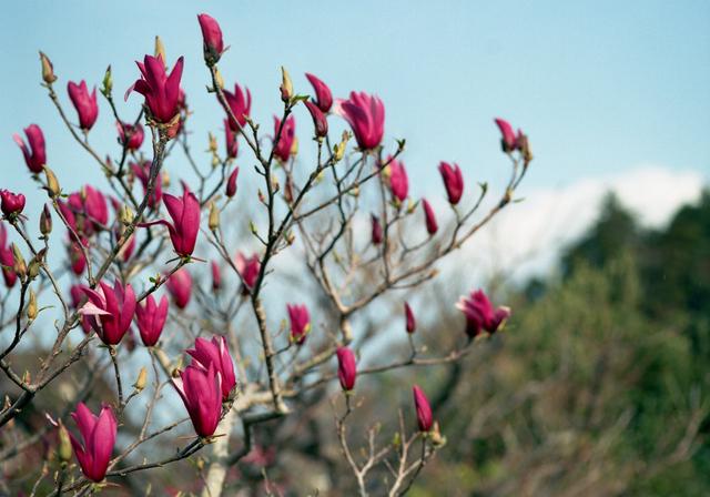 2011Apr_flower05.jpg